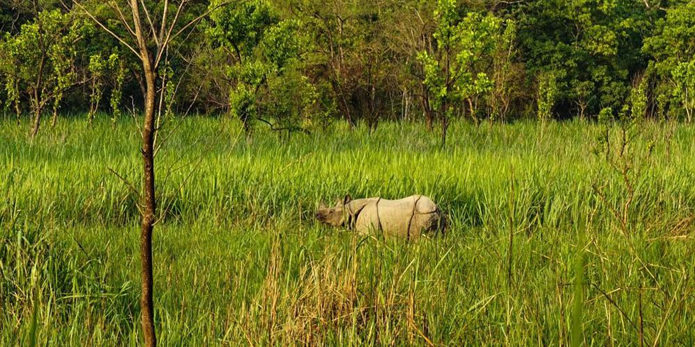 Chitwan National Park : Chitwan Tourism
